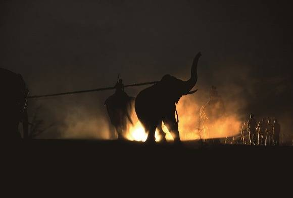 Wildlife Photography inTransit
