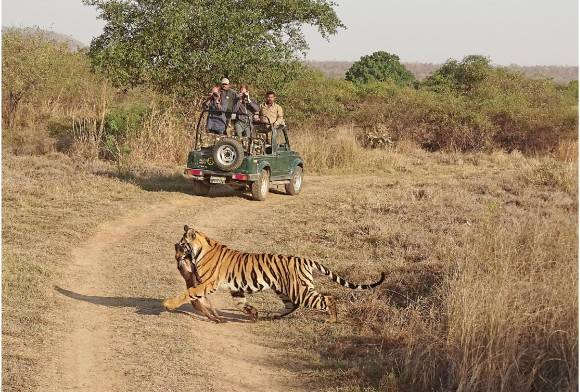 Expanding Tiger Conservation