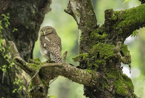 Dihing Patkai: Where Owls Thrive