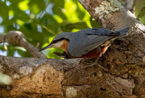 Birding in Myanmar