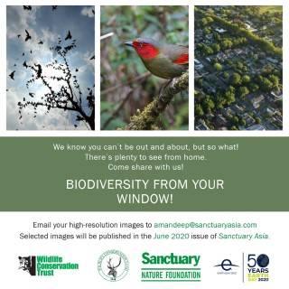 Biodiversity From My Window