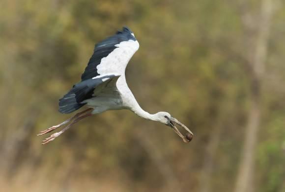 Indian Ornithology: A 40-Year Legacy