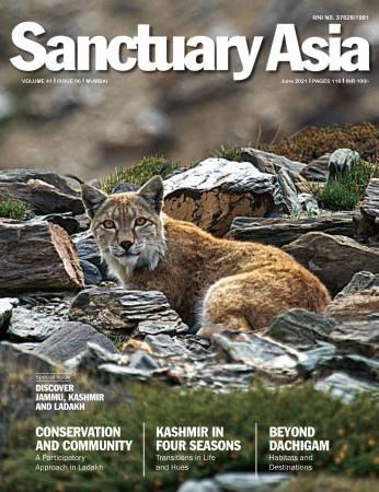 Sanctuary Latest Issue